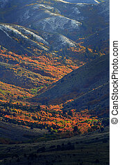 Mountainside in Autumn with Red Leaves