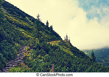 Mountainside with green trees.