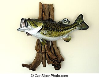 Photographed mounted Large Mouth Bass caught in Florida.
