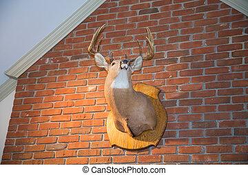 Mounted Deer Head on Brick Wall