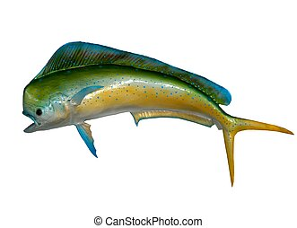 Colorful mount of a Dolphin fish