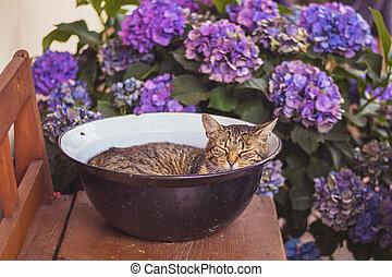 mourek, uspat devítiocasá kočka, mísa