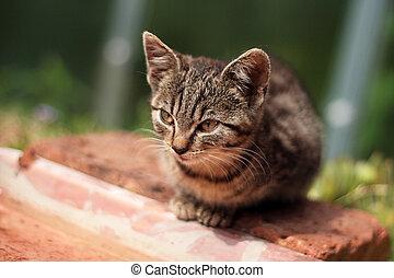mourek, zahrada, kotě, malý, sedění
