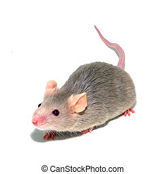 mouse 4 - small mouse