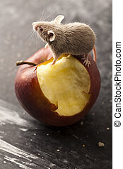 Mouse and apple, rural vivid colorful theme