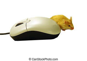 Mouse and Mouse - Computer mouse with pet mouse