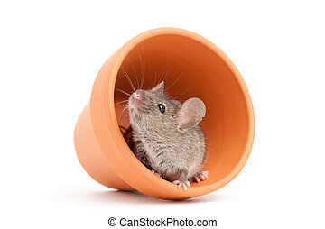 mouse and pot isolated on white