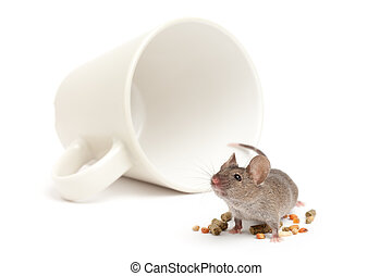 mouse cup and food isolated - mouse with toppled coffee cup ...