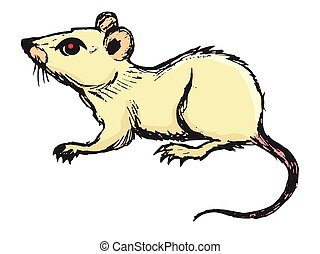 Mouse, domestic pest