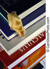 Mouse from above - Mouse descends a stack of books