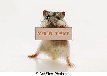 mouse holding white sign to write it on your text isolated ...