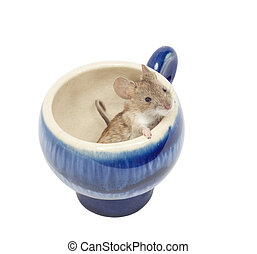 mouse in a blue glass