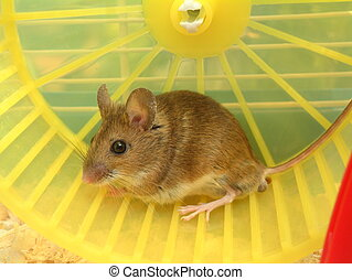Mouse in Cage - Mouse on wheel in cage