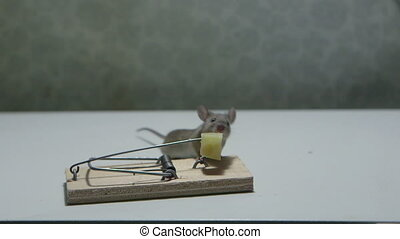 Mouse killed in a mousetrap Canon C100, 60i