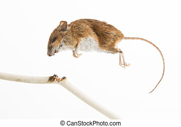 Mouse killed by chewing on a power cable