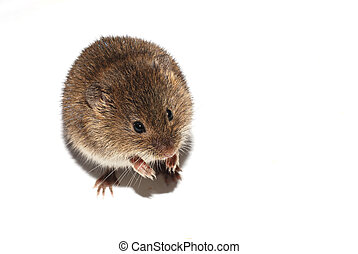 mouse on white left
