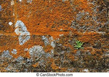 mur couvert pierre mousse mur pierre ancien vert image recherchez photos clipart. Black Bedroom Furniture Sets. Home Design Ideas
