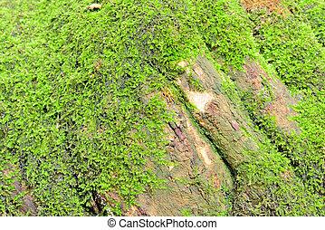 Ferm arbre haut lichen vert mousse corce - Mousse sur les arbres ...