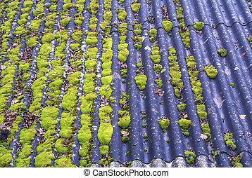 mousse toit ardoise gris toit france lichen mousse images rechercher photographies et. Black Bedroom Furniture Sets. Home Design Ideas