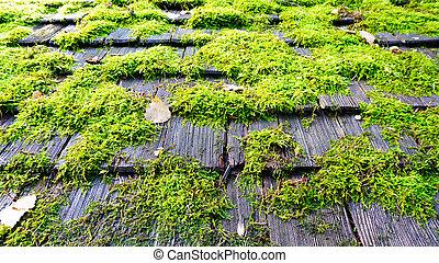 mousse toit mousse soir toit lumi re soleil photos de stock rechercher des photographies. Black Bedroom Furniture Sets. Home Design Ideas