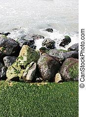 mousse, sur, rochers