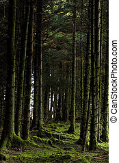moussu, arbres