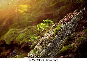 moussu, arbres, rochers, forêt, mystérieux, bizarre, racines