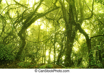 moussu, forêt