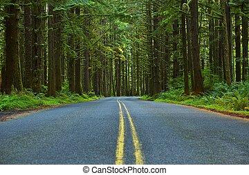 moussu, forêt, route