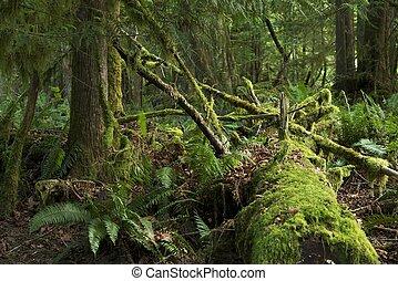 moussu, rainforest