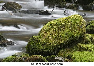 moussu, ruisseau, rocher