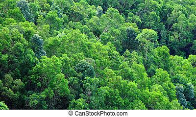 moutain, zielony las