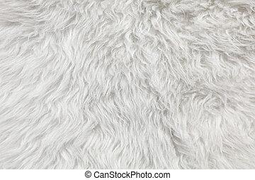 mouton, arrière-plan., laine, fourrure, détail