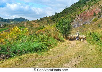 mouton, berger, troupeau, sien