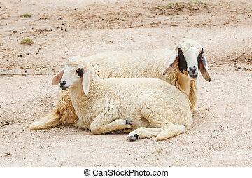 mouton, déposer