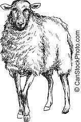 mouton, dessiné, main