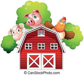 mouton, dos, cochon, poulet, dissimulation, grange