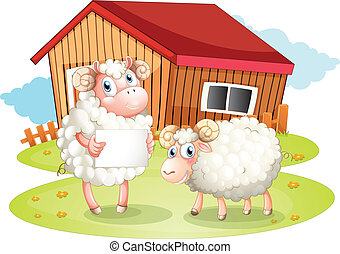 mouton, dos, tenue, signage, vide, grange