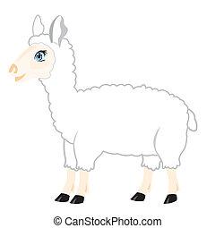 mouton, fond blanc
