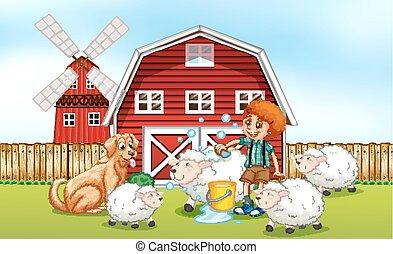 mouton, garçon, donner, ferme, bain