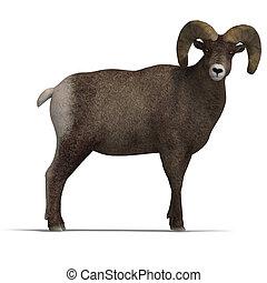 mouton, grand klaxon, bélier