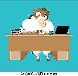 mouton, illustration., ferme, bureau., boss., marteau, desk., vecteur, homme affaires