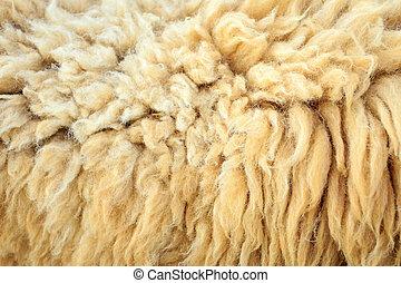 mouton, laine