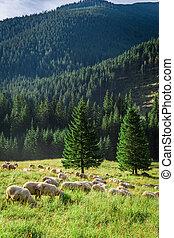 mouton, montagnes, pré, troupeau, vert, tatra, pâturage