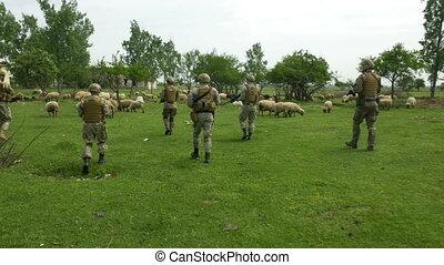 mouton, patrouille, habillement, village, camouflage, aller, par, militaire, soldats, troupeau, armé, escouade