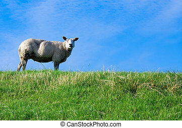 mouton, sur, frais, herbe verte