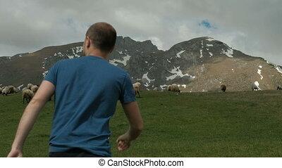 mouton, têtes, pré, animaux, pelucheux, jeune, rapidement, grass., vert, va, paître, par, outdoors., homme, où, manger, il