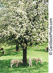 mouton, troupeau, arbre, sous