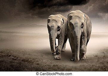 mouvement, éléphants, paire