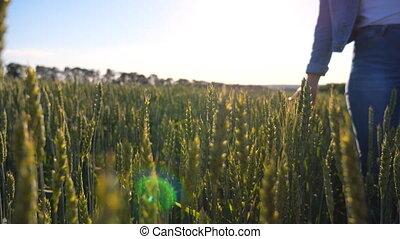 mouvement, aller, barley., toucher, environnement, lent, été, nature, dame, oreilles, femme, tiges blé, ensoleillé, long, vert, marche, day., sur, pré, champ, girl, par, en mouvement, apprécier, main, crop.